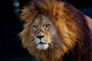lion 300x200 - Fun for free in Jersey City